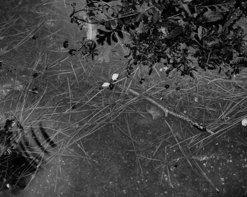 tiny rain forest 3